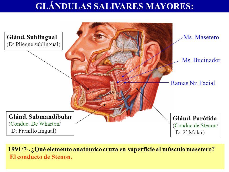 GLÁNDULAS SALIVARES MAYORES: