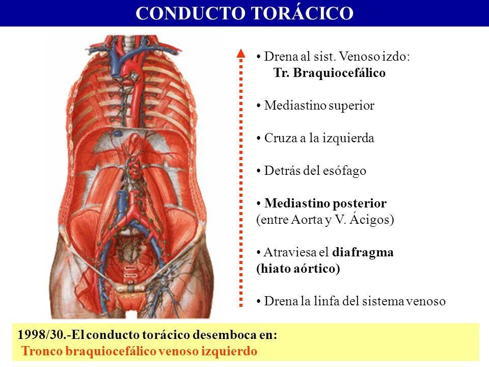 Excepcional Innominada La Anatomía Venosa Elaboración - Imágenes de ...