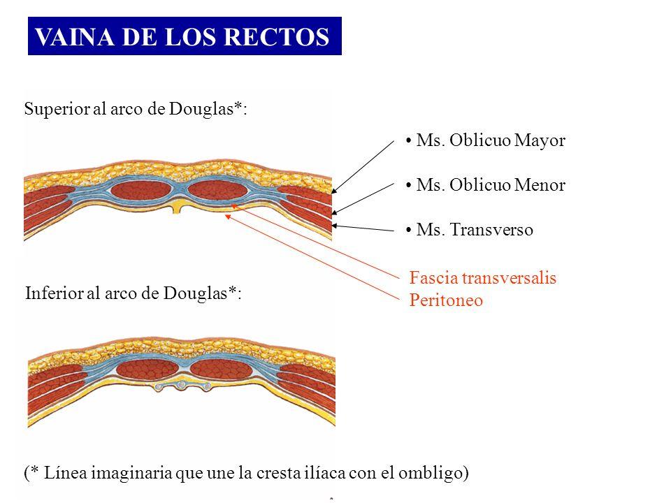 VAINA DE LOS RECTOS Superior al arco de Douglas*: Ms. Oblicuo Mayor