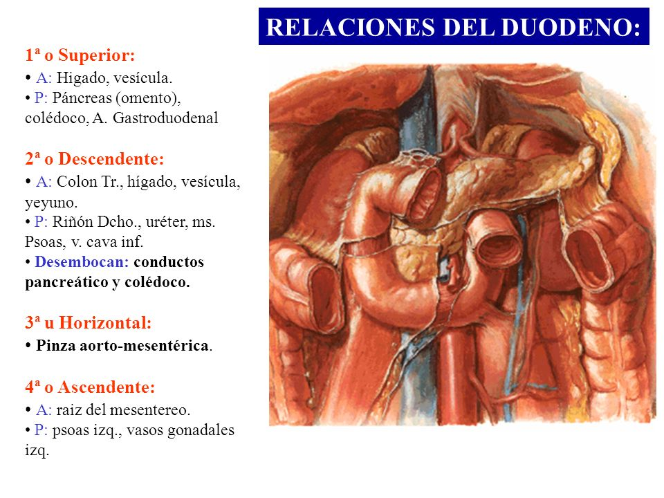RELACIONES DEL DUODENO: