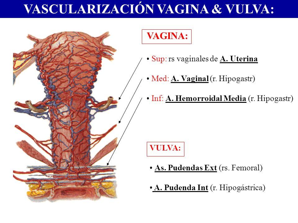 VASCULARIZACIÓN VAGINA & VULVA: