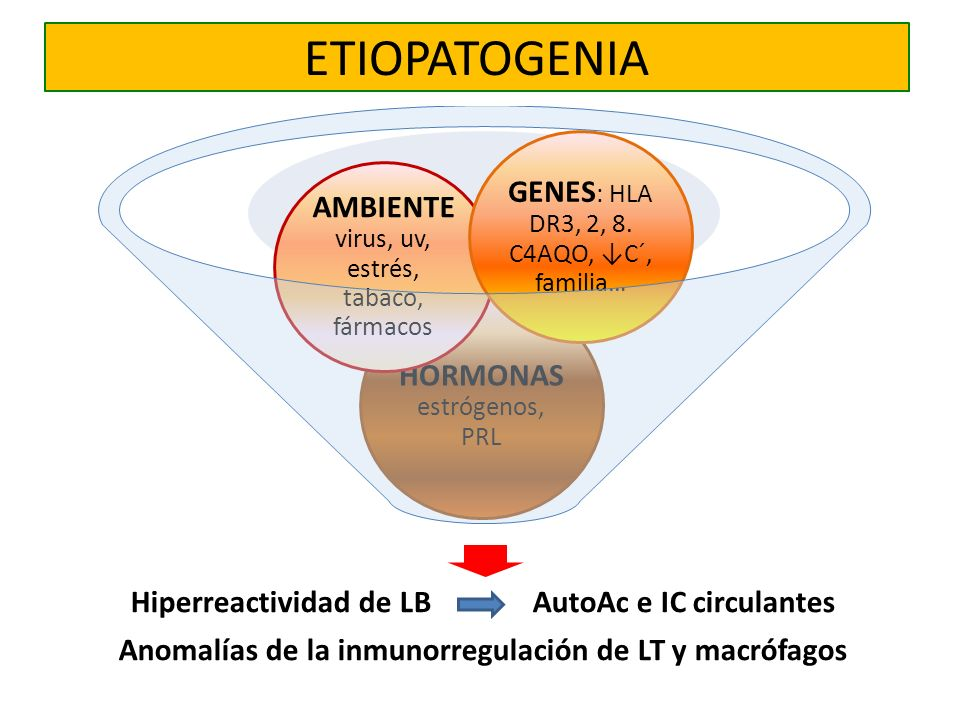 ETIOPATOGENIA GENES: HLA DR3, 2, 8. C4AQO, ↓C´, familia…