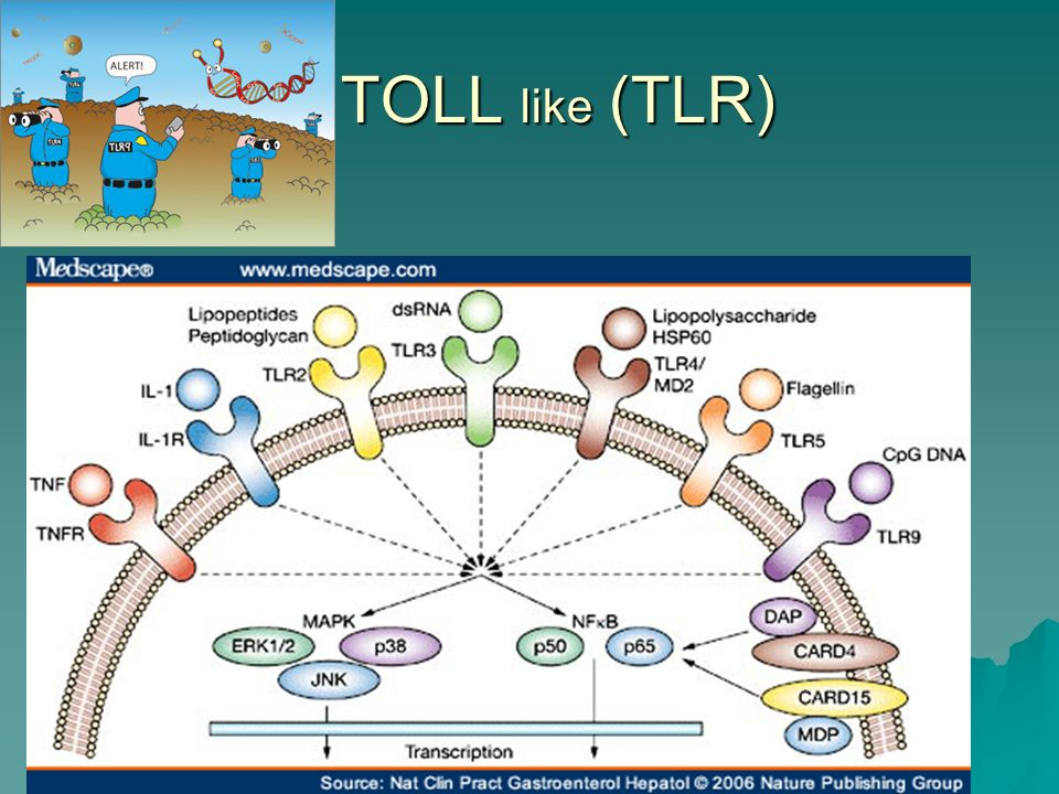 TOLL like (TLR)
