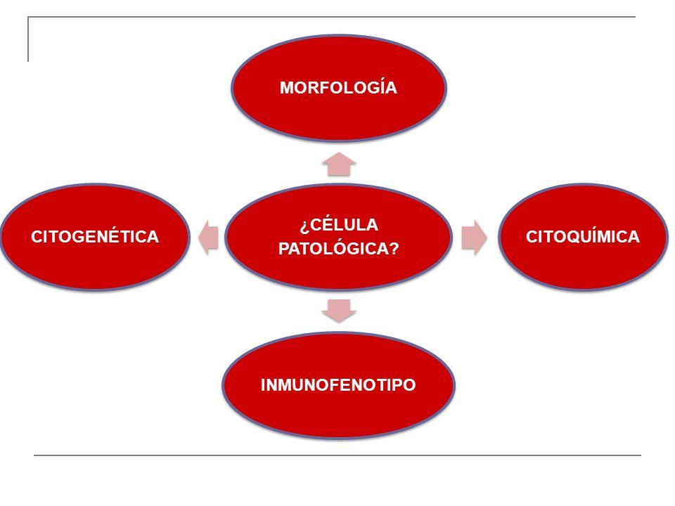 ¿CÉLULA PATOLÓGICA MORFOLOGÍA CITOQUÍMICA INMUNOFENOTIPO CITOGENÉTICA