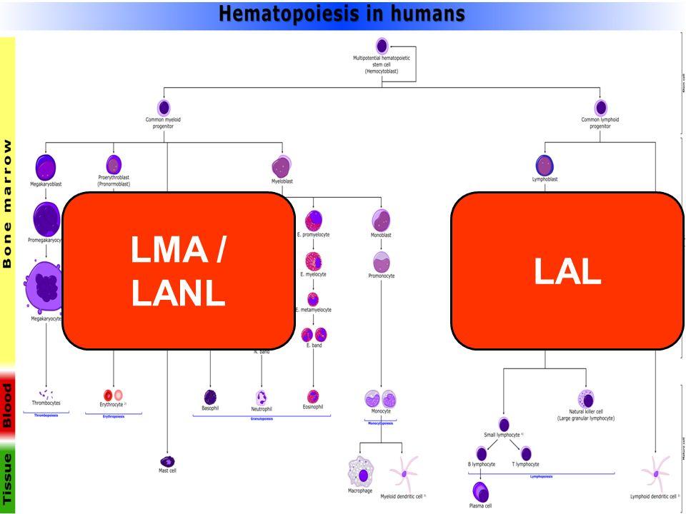LMA / LANL LAL
