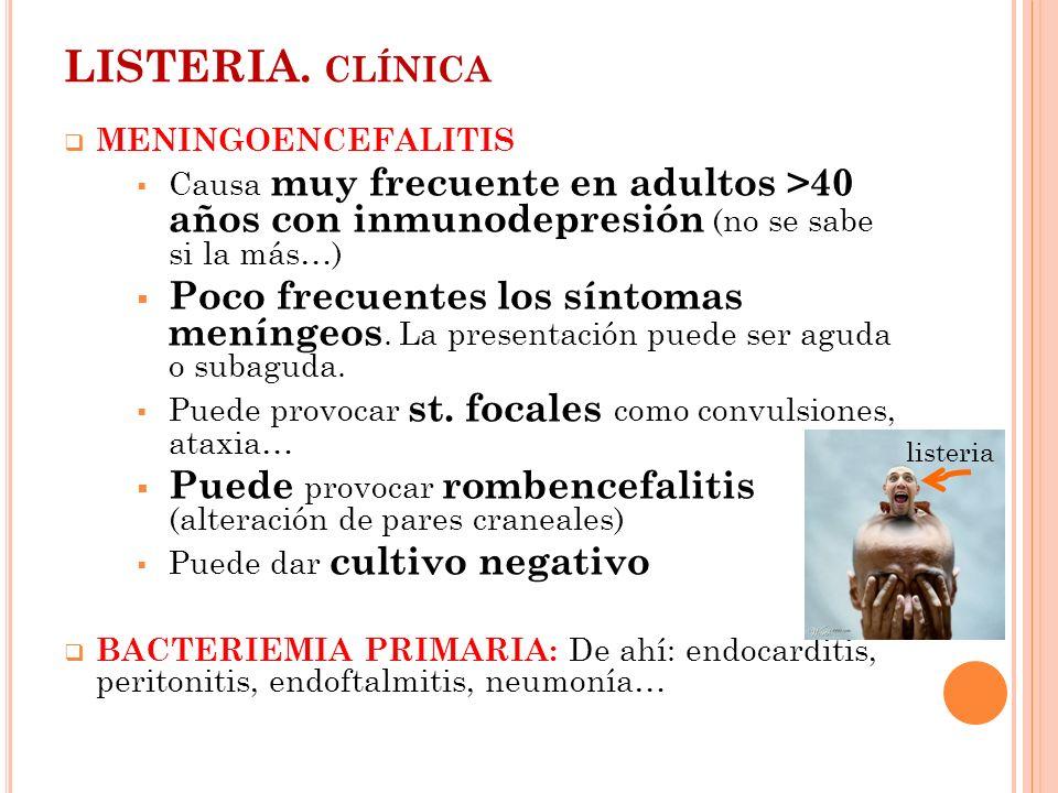 LISTERIA. clínica MENINGOENCEFALITIS. Causa muy frecuente en adultos >40 años con inmunodepresión (no se sabe si la más…)