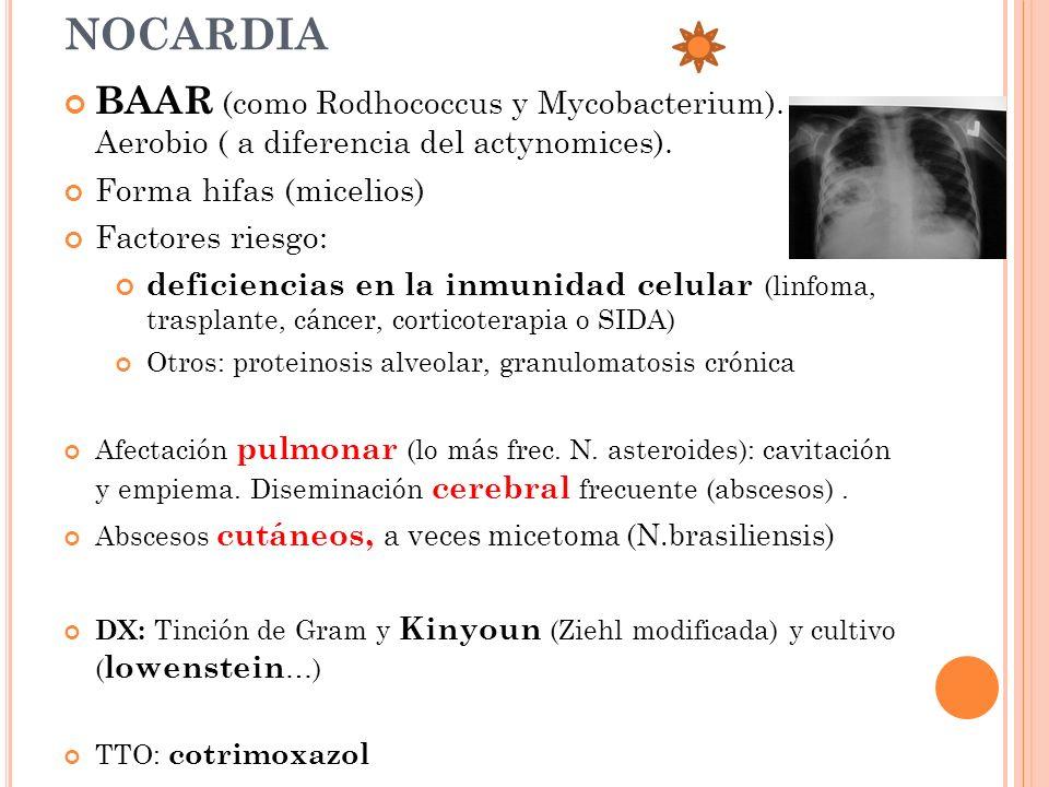 NOCARDIA BAAR (como Rodhococcus y Mycobacterium). Aerobio ( a diferencia del actynomices). Forma hifas (micelios)