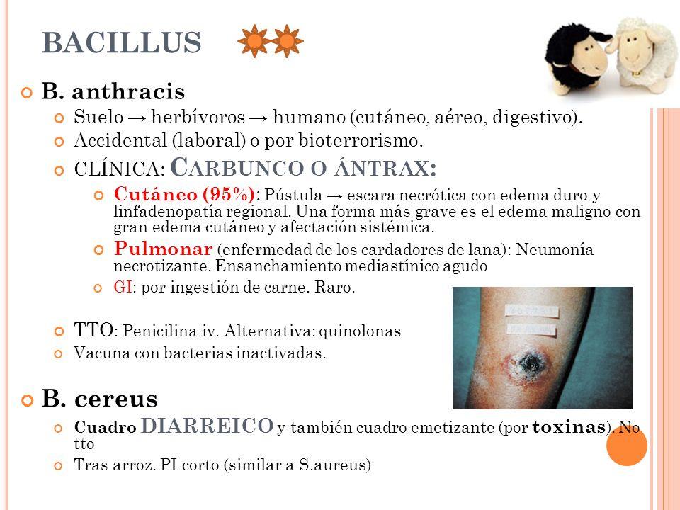 BACILLUS B. cereus B. anthracis