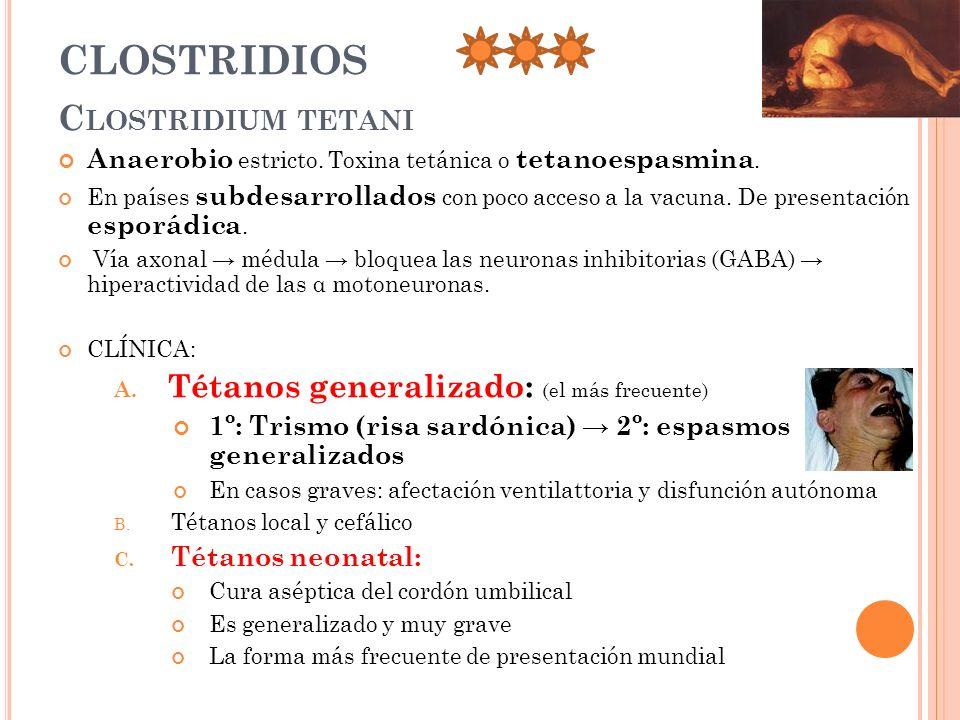 CLOSTRIDIOS Clostridium tetani