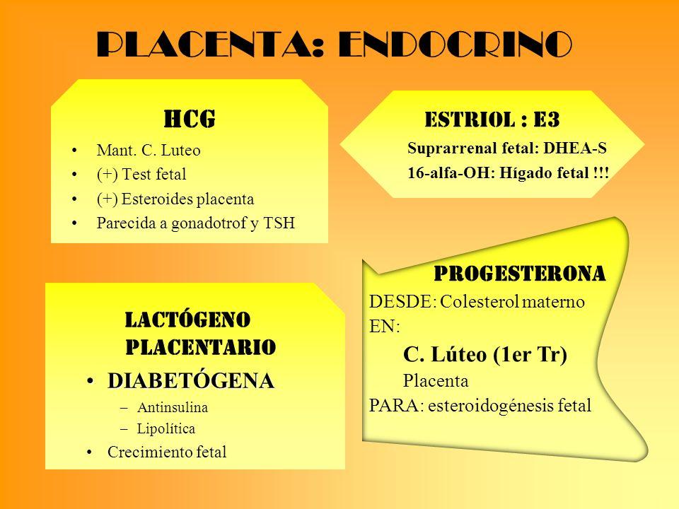 Lactógeno placentario