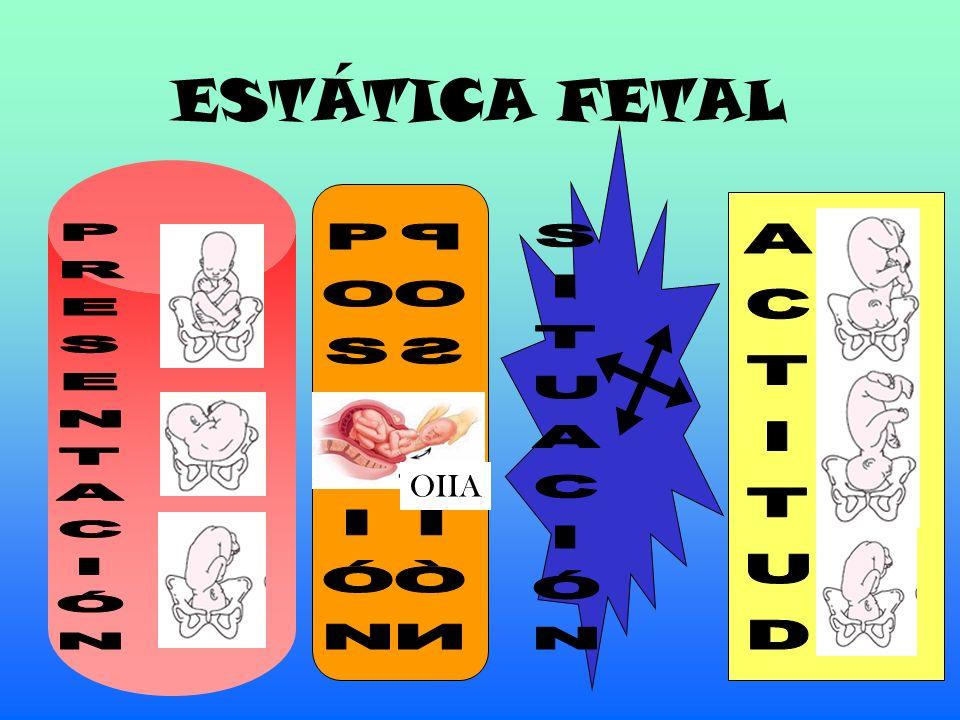 ESTÁTICA FETAL PRESENTACIÓN POSICIÓN POSICIÓN SITUACIÓN ACTITUD OIIA
