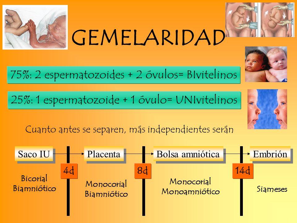 GEMELARIDAD 75%: 2 espermatozoides + 2 óvulos= BIvitelinos