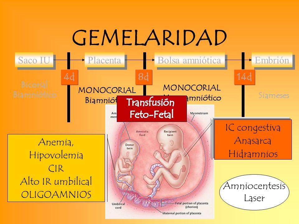GEMELARIDAD Placenta Bolsa amniótica Embrión Saco IU 4d 8d 14d