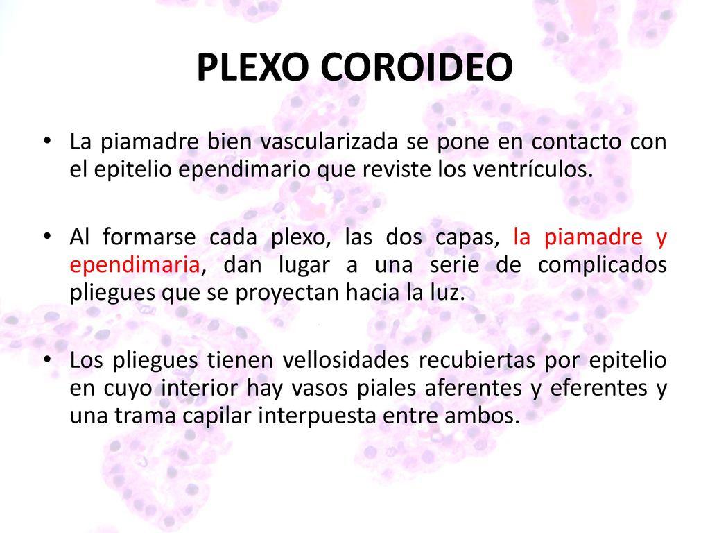 Contemporáneo Anatomía Del Plexo Coroideo Componente - Anatomía de ...