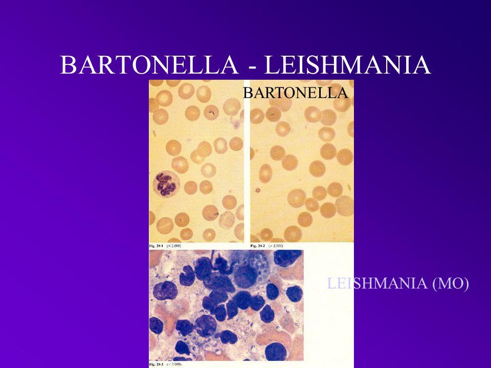 BARTONELLA - LEISHMANIA