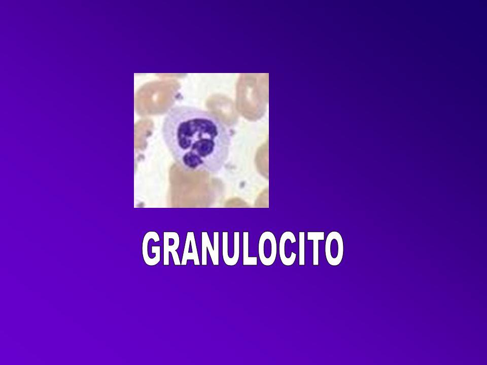 GRANULOCITO