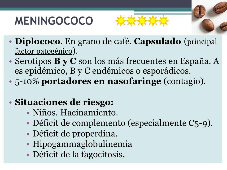 MENINGOCOCO Diplococo. En grano de café. Capsulado (principal factor patogénico).