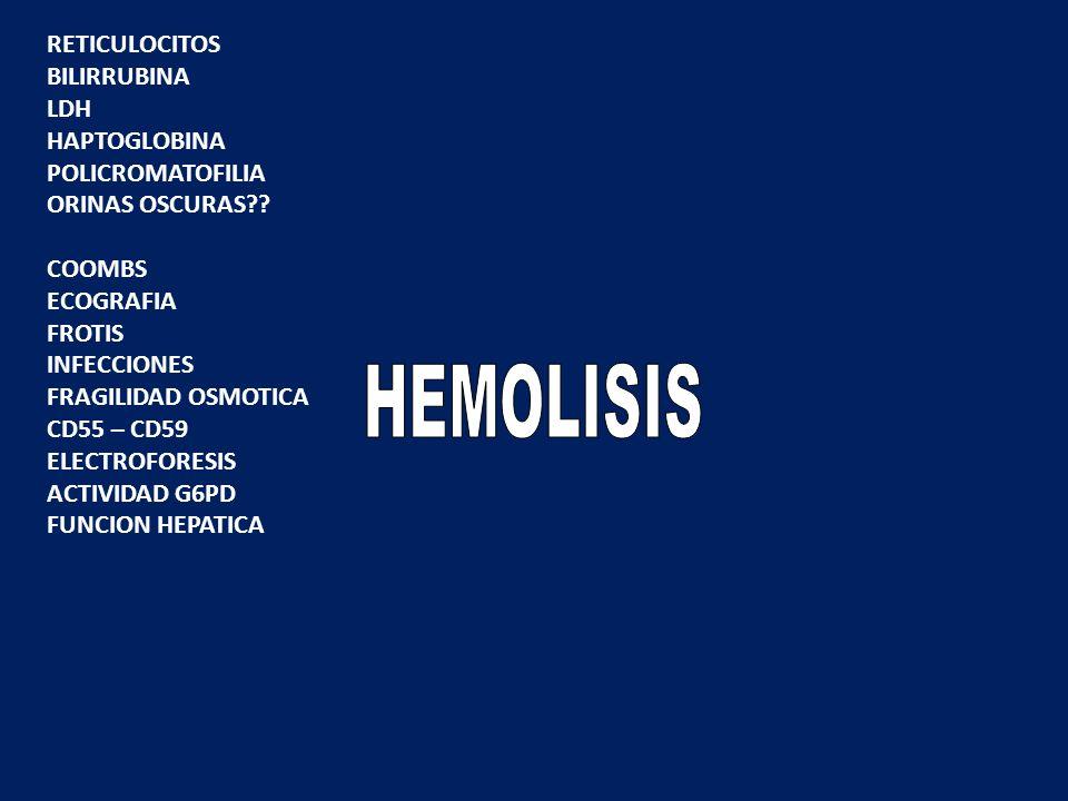 HEMOLISIS RETICULOCITOS BILIRRUBINA LDH HAPTOGLOBINA POLICROMATOFILIA
