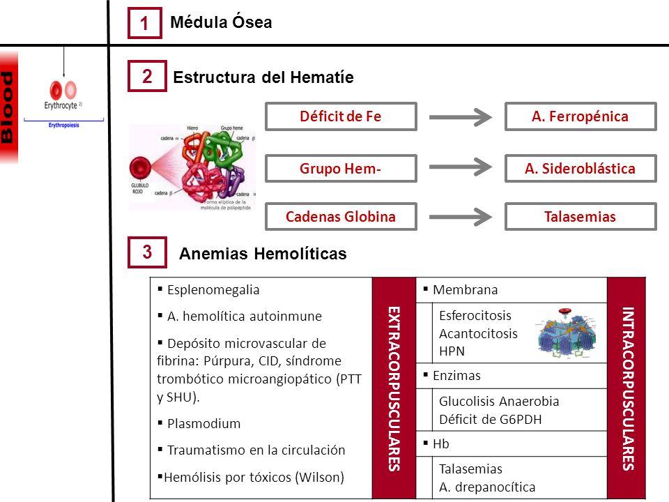 Estructura del Hematíe