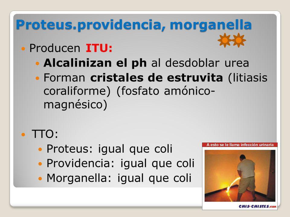 Proteus.providencia, morganella