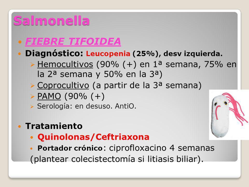 Salmonella FIEBRE TIFOIDEA