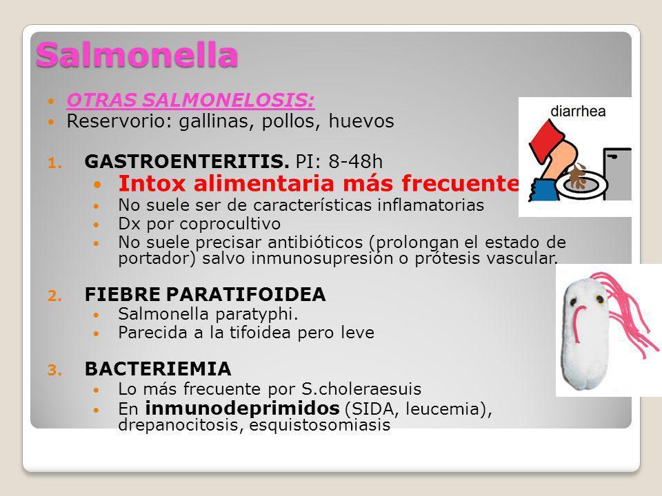 Salmonella Intox alimentaria más frecuente OTRAS SALMONELOSIS: