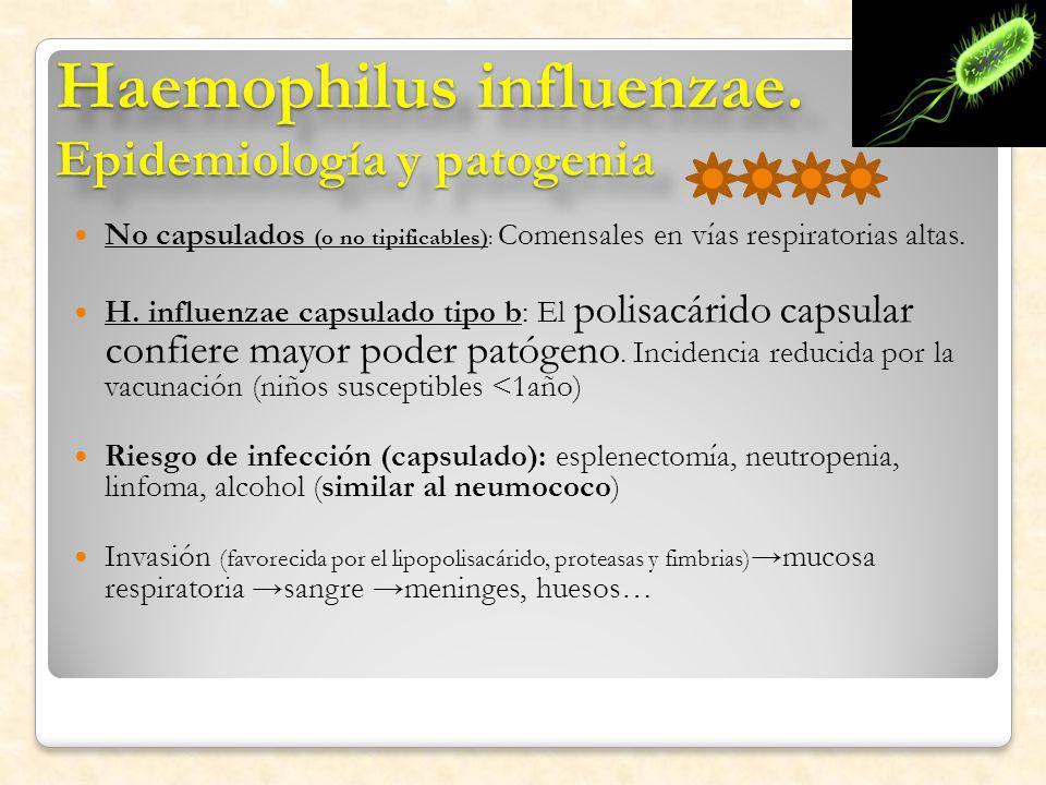 Haemophilus influenzae. Epidemiología y patogenia