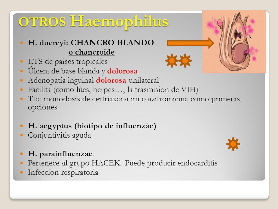 OTROS Haemophilus H. ducreyi: CHANCRO BLANDO o chancroide