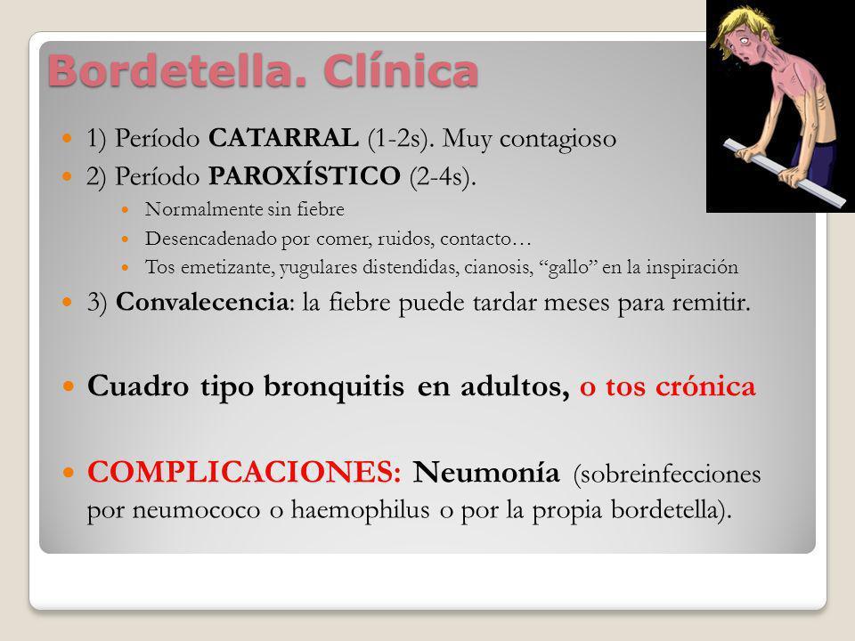 Bordetella. Clínica Cuadro tipo bronquitis en adultos, o tos crónica