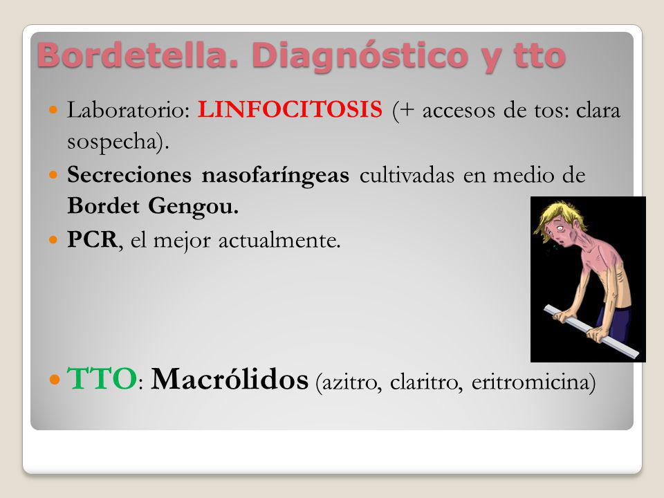 Bordetella. Diagnóstico y tto