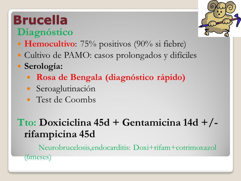 Brucella Diagnóstico. Hemocultivo: 75% positivos (90% si fiebre) Cultivo de PAMO: casos prolongados y difíciles.