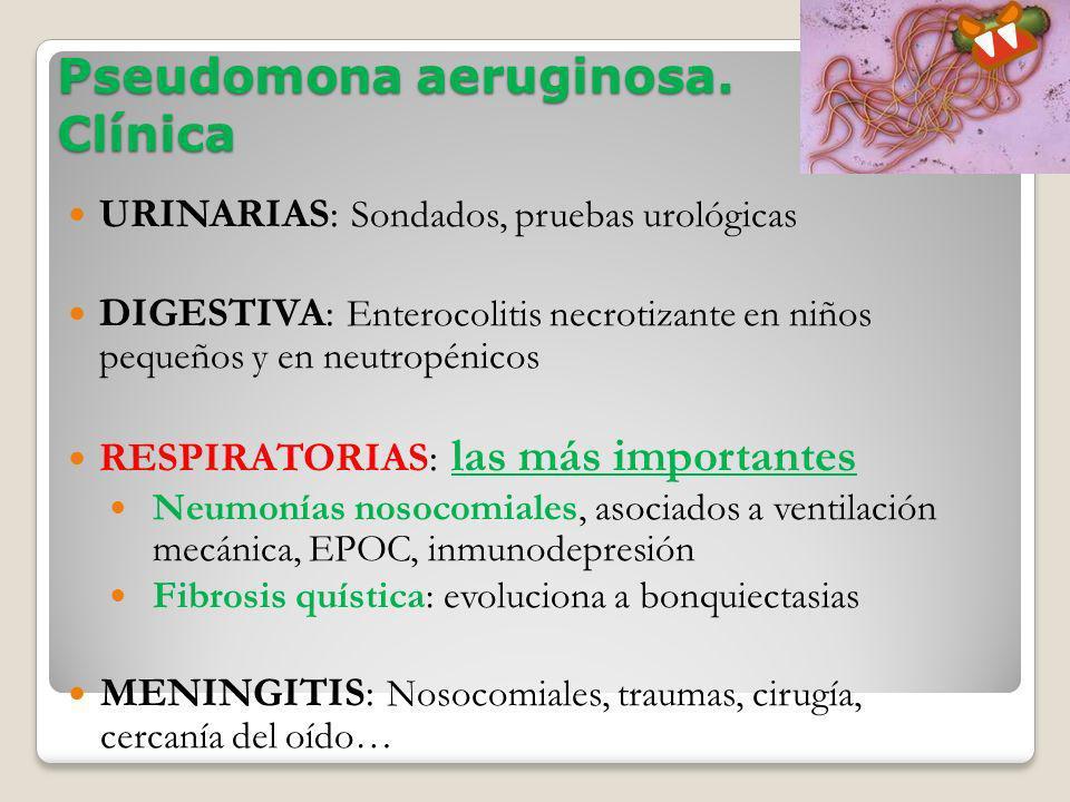 Pseudomona aeruginosa. Clínica
