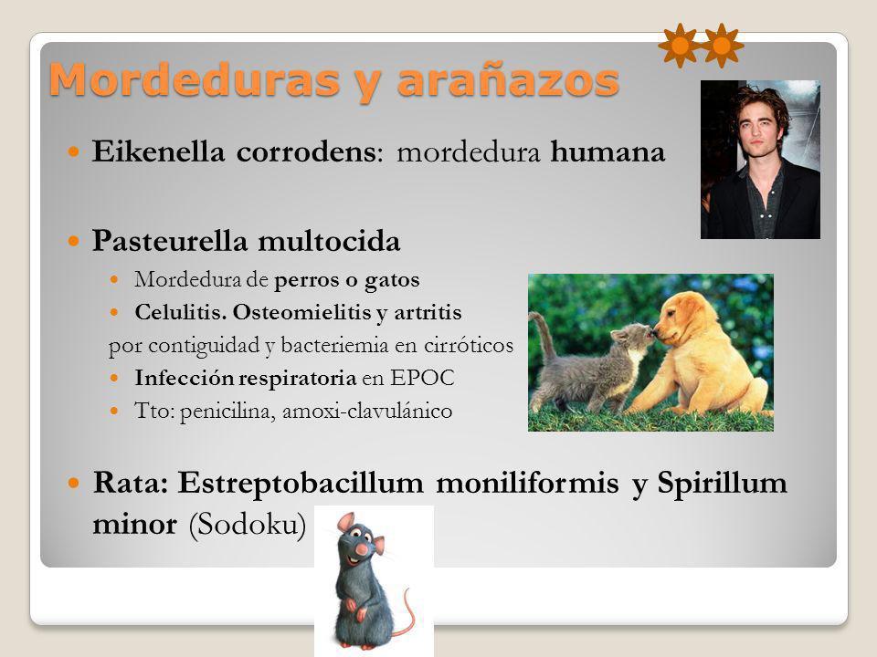 Mordeduras y arañazos Eikenella corrodens: mordedura humana