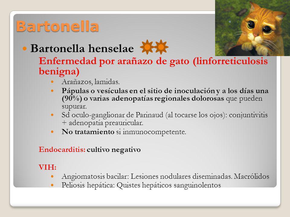 Bartonella Bartonella henselae