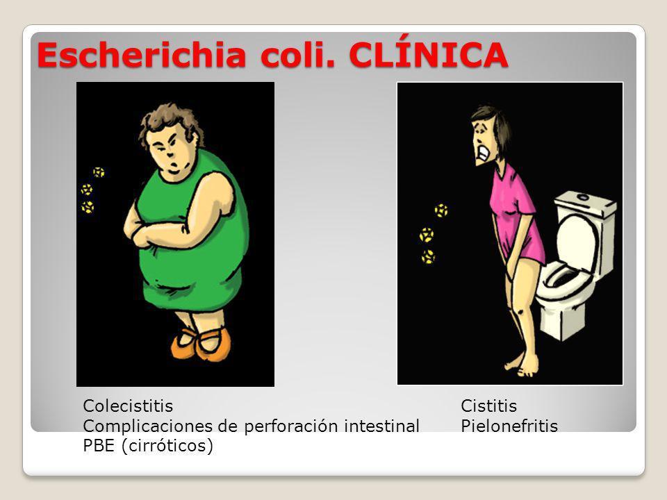Escherichia coli. CLÍNICA