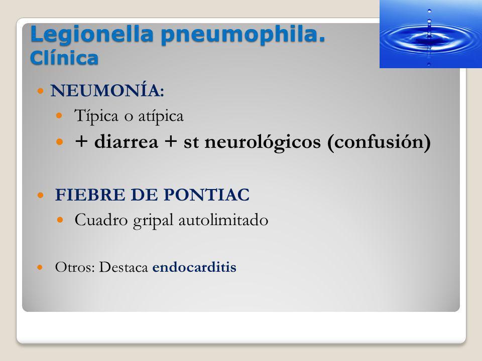 Legionella pneumophila. Clínica
