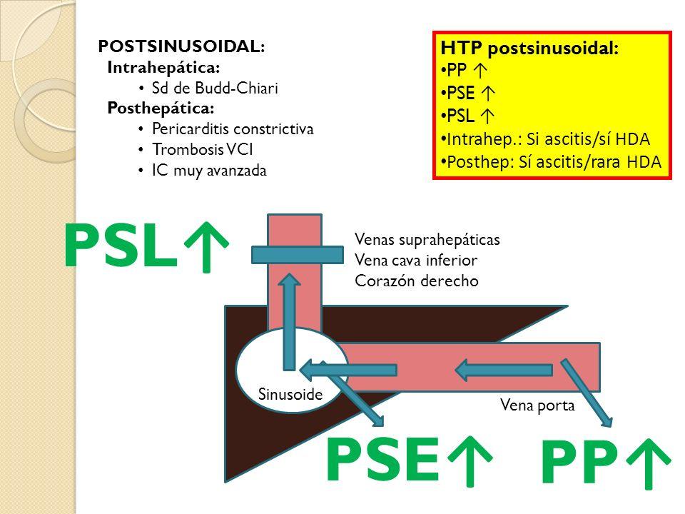 PSL↑ PSE↑ PP↑ HTP postsinusoidal: PP ↑ PSE ↑ PSL ↑