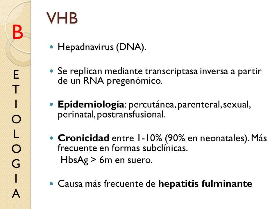 B VHB E T I O L G A Hepadnavirus (DNA).