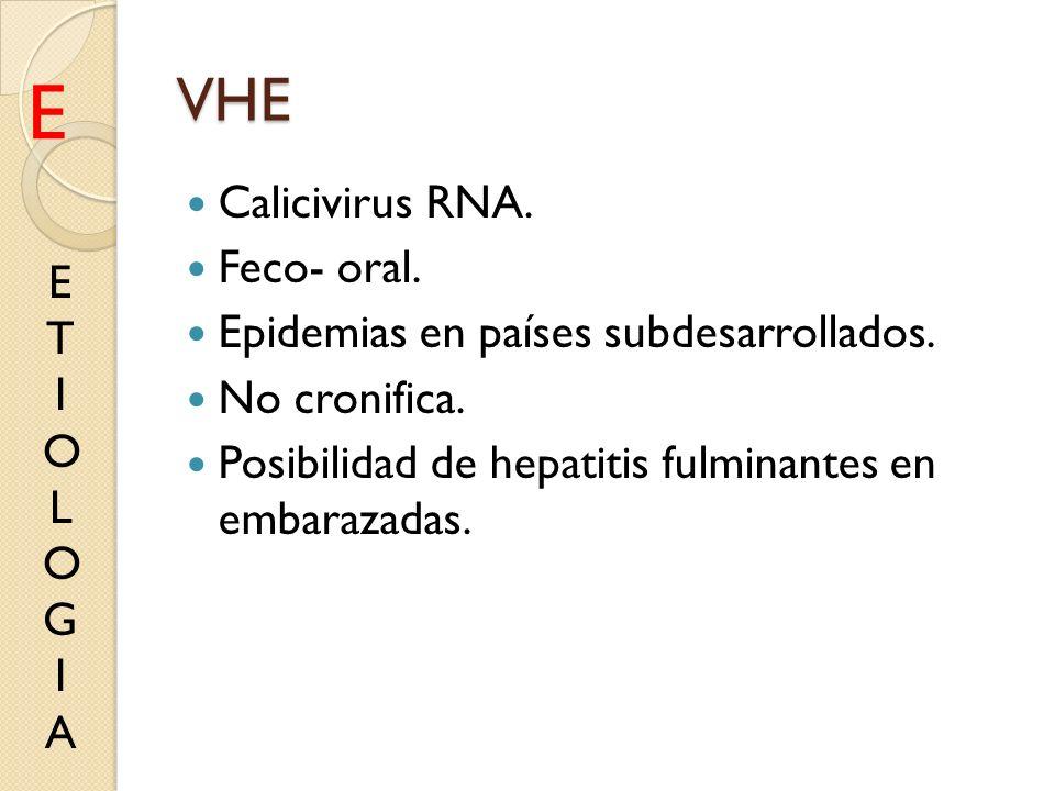 E VHE Calicivirus RNA. Feco- oral.