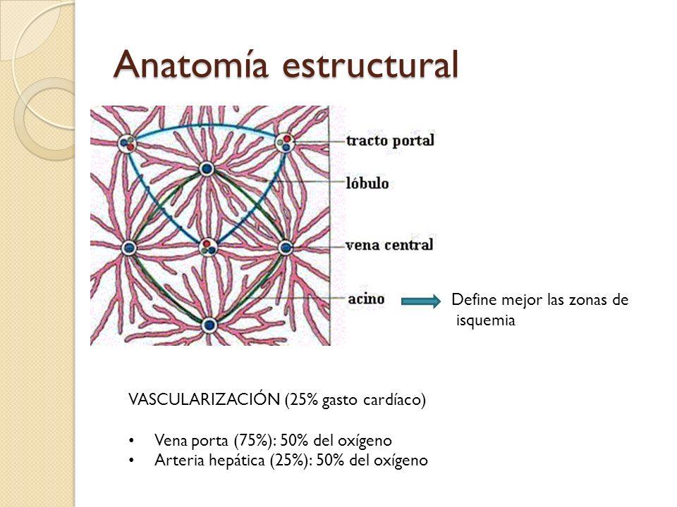 Anatomía estructural Define mejor las zonas de isquemia