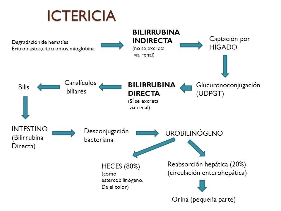 ICTERICIA BILIRRUBINA INDIRECTA Captación por HÍGADO Canalículos
