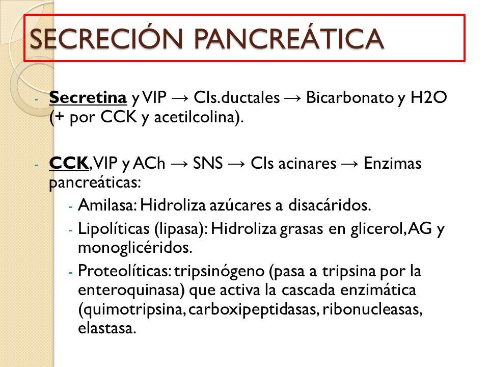 SECRECIÓN PANCREÁTICA