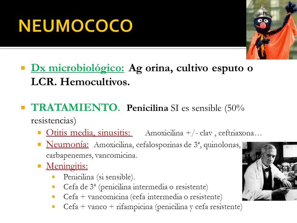 NEUMOCOCO Dx microbiológico: Ag orina, cultivo esputo o LCR. Hemocultivos. TRATAMIENTO. Penicilina SI es sensible (50% resistencias)