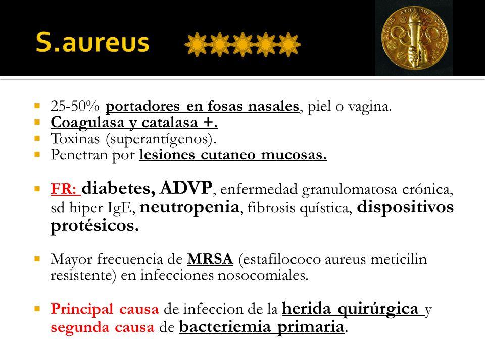 S.aureus 25-50% portadores en fosas nasales, piel o vagina.