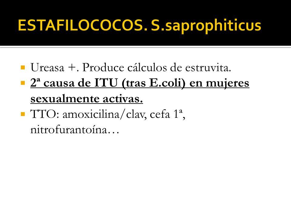 ESTAFILOCOCOS. S.saprophiticus