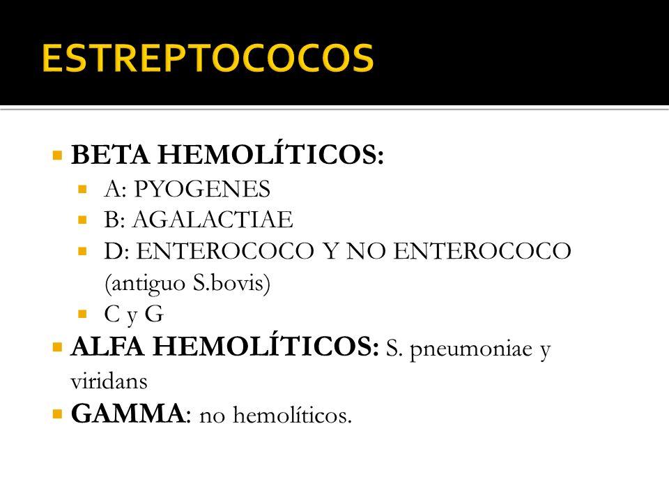 ESTREPTOCOCOS BETA HEMOLÍTICOS: