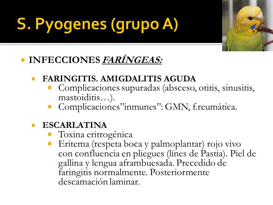 S. Pyogenes (grupo A) INFECCIONES FARÍNGEAS: