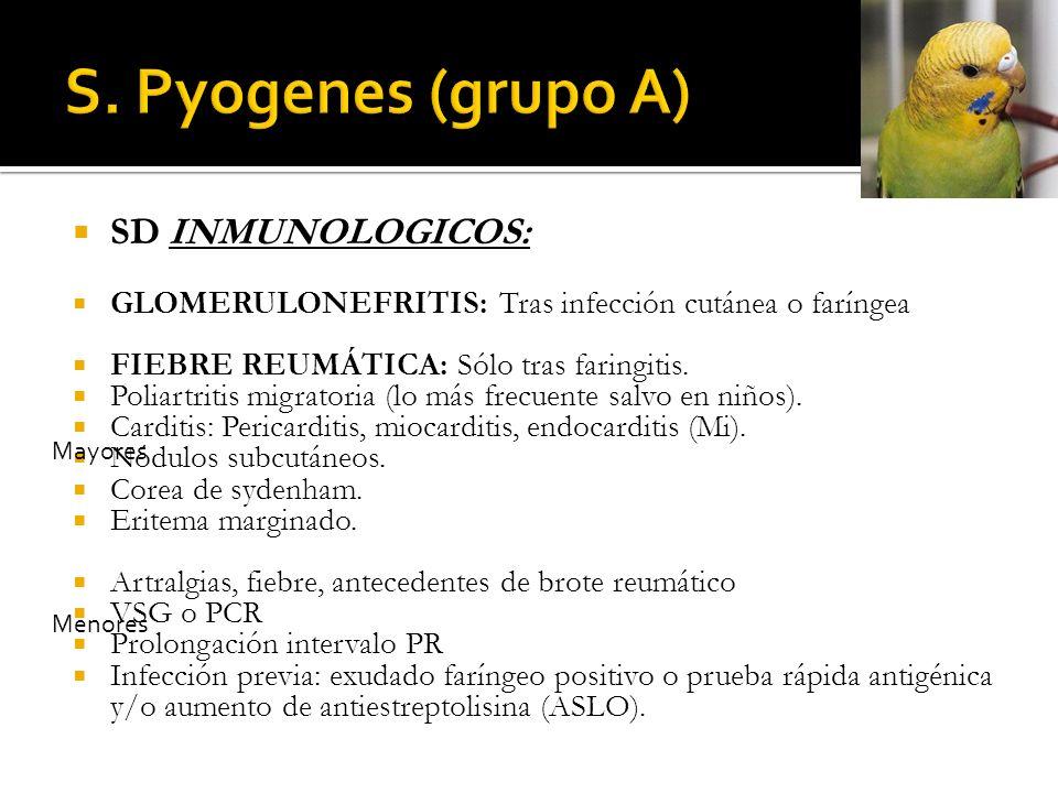 S. Pyogenes (grupo A) SD INMUNOLOGICOS: