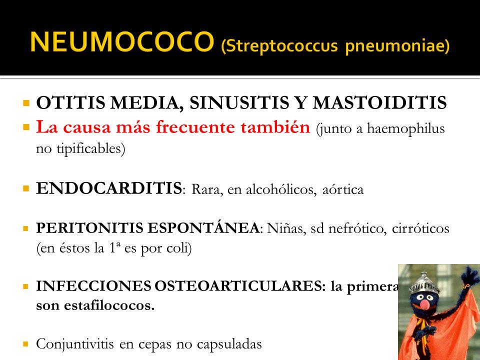 NEUMOCOCO (Streptococcus pneumoniae)