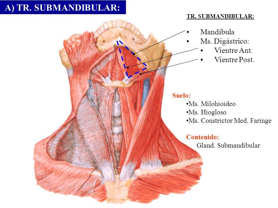 A) TR. SUBMANDIBULAR: Mandíbula Ms. Digástrico: Vientre Ant.
